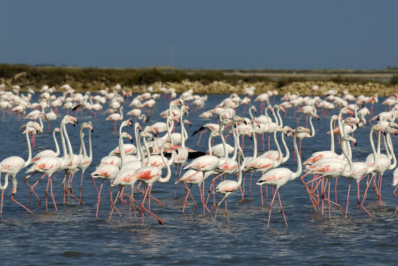 SALINS_FLAMANTS_2